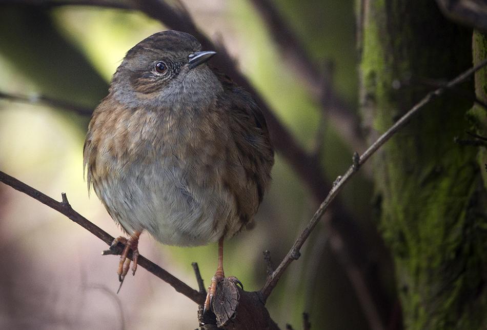 Sparrow, 11/2/18