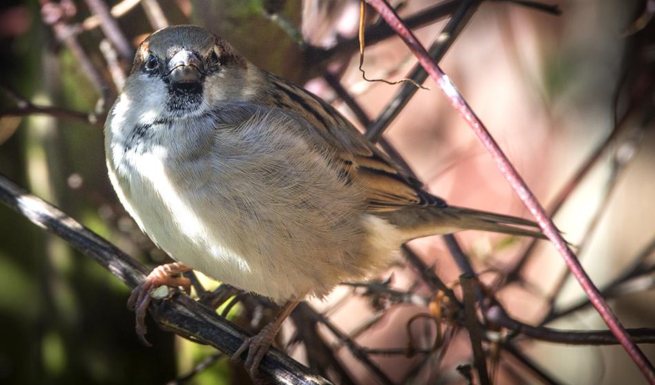 Sparrow 12/2/18